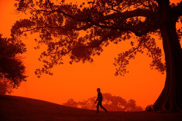 A man walks his dog through Observatory Hill near Sydney on September 23, 2009 as Australia's biggest city is shrouded in an eerie blanket of red dust. Sydney's cars and buildings turned orange as strong winds blew desert dust across the city, snarling commuter and air transport and prompting a warning for children and the elderly to stay indoors. (GREG WOOD/AFP/Getty Images)